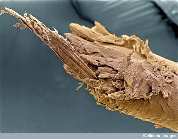 Get up close with innards of human body
